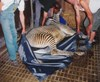 picture of Zoo Animal Stretcher 2