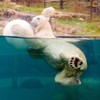 picture of Polar Bear Play Ball