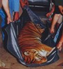 picture of Zoo Animal Stretcher 1