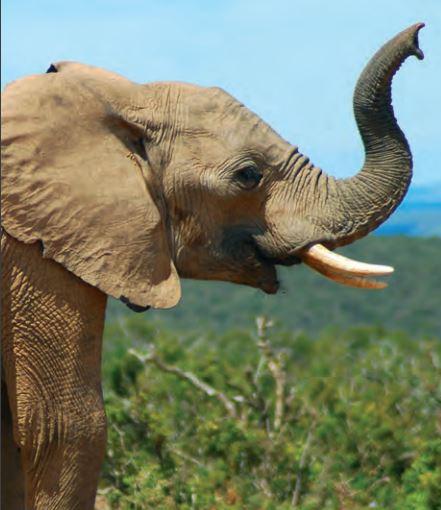 elefanten zooprofis online shop. Black Bedroom Furniture Sets. Home Design Ideas